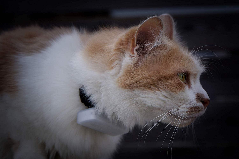 Weenect Cats 2 Traceur GPS pour Chat pas cher et efficace