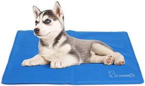 Avis tapis rafraîchissant pour chien Pecute