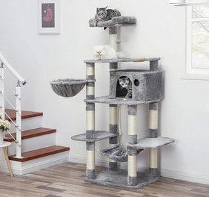 Caractéristiques de l'arbre à chat géant Feandrea