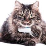 Comparatif pour choisir le meilleur collier gps pour chat