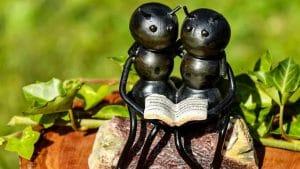 Se débarrasser des fourmis sans produits chimiques
