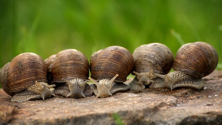 Astuces pour faire fuir les limaces et escargots du potager