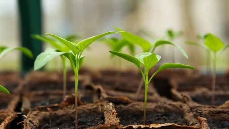 Astuces pour réussir son semis