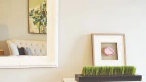 Enlever les traces de moisissure sur les murs