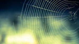 Solutions pour faire fuir les araignées de son logement